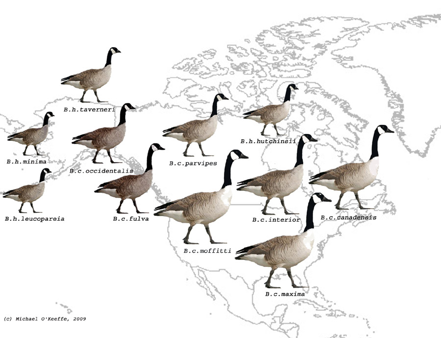 canada goose company background